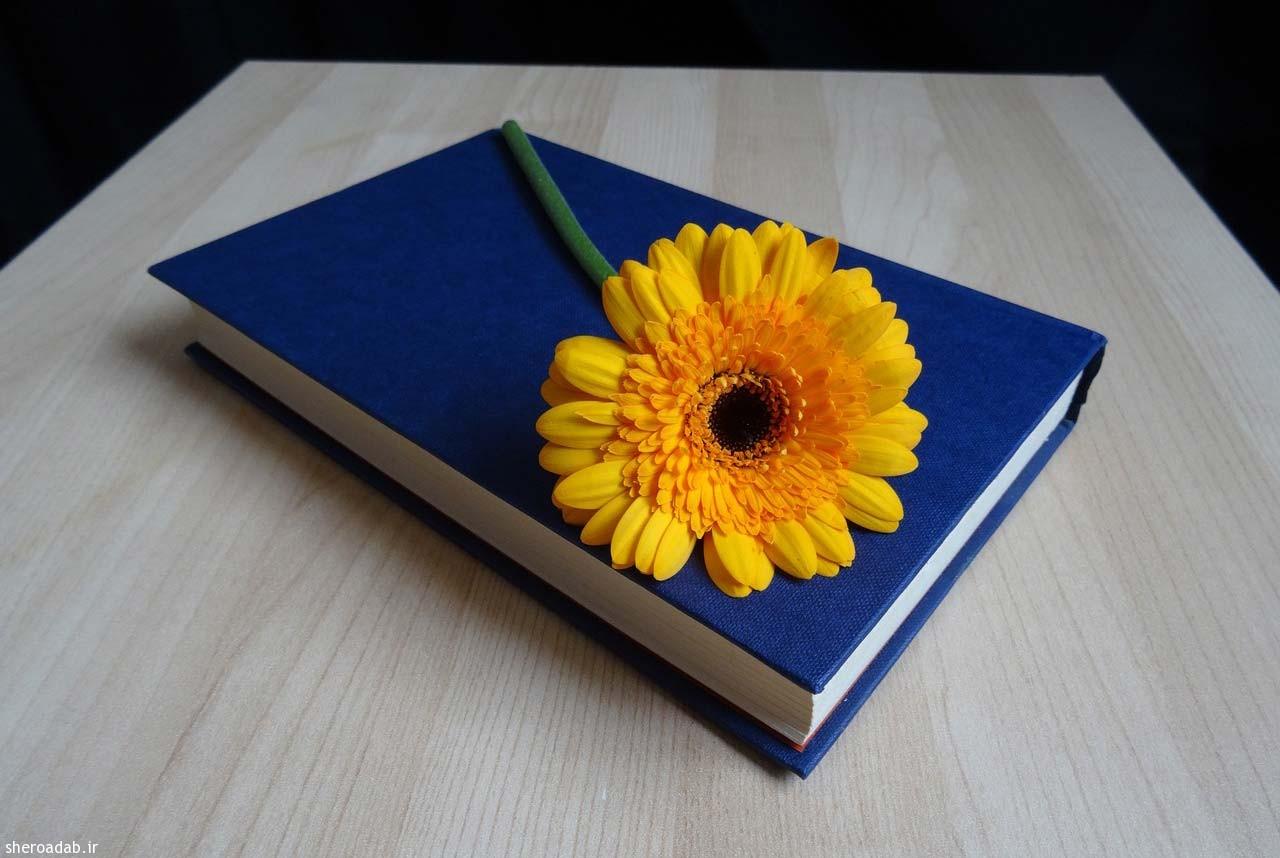 شاعر تو را دید و غم خود باز یادش رفت – محسن شیخی