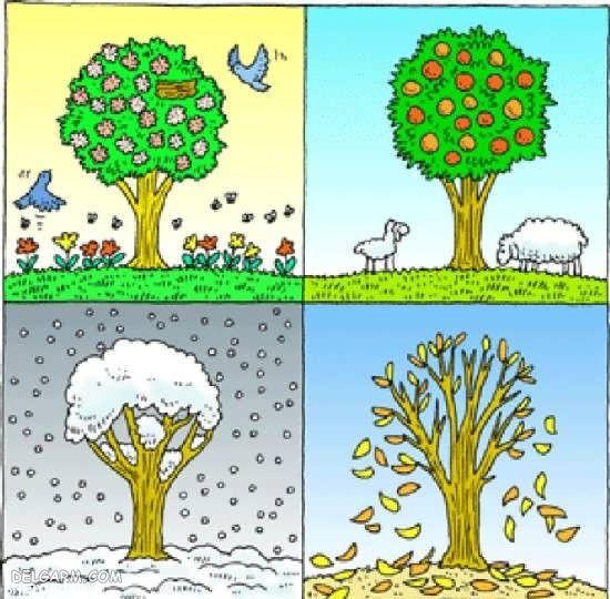 شعر کودکانه درباره چهار فصل سال